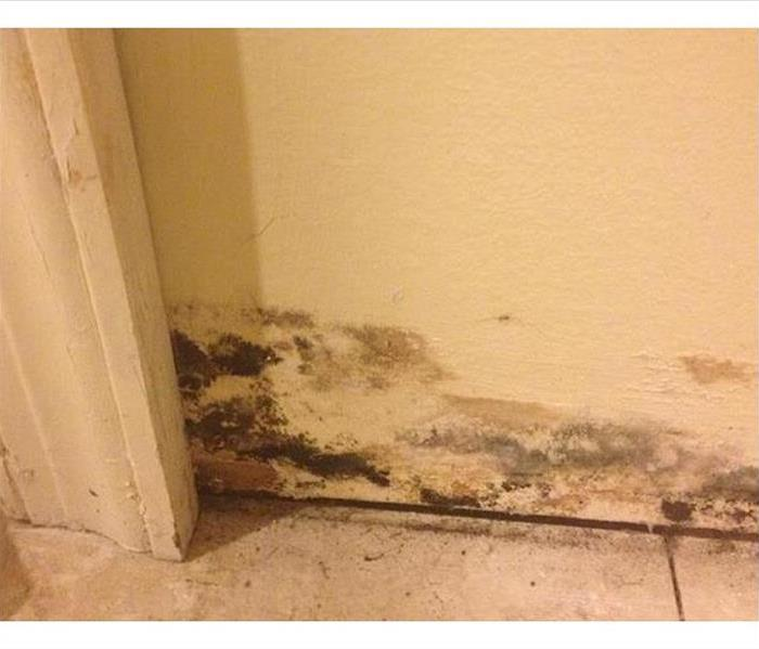 Mold Remediation in New Smyrna Beach Before