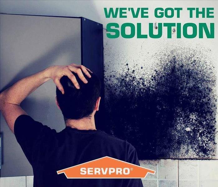 Mold Remediation Useful Knowledge of Mold