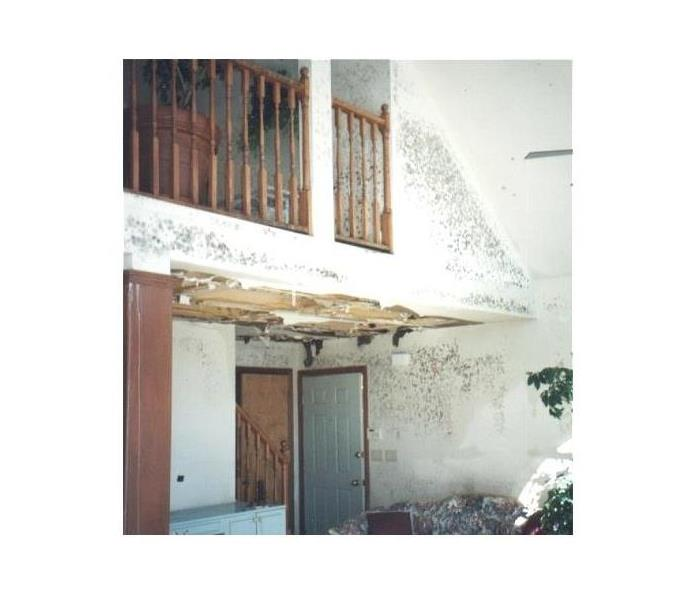 Mold Remediation Mold Remediation in New Smyrna Beach