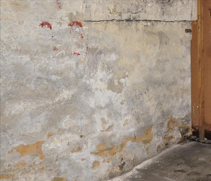 Mold Remediation Mold Damage Restoration Services In New Smyrna Beach