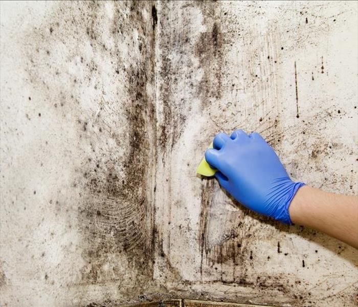 Commercial Mold Remediation for New Smyrna Beach Businesses